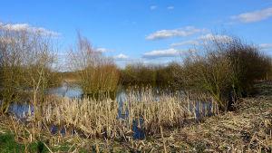 Woodcote lake